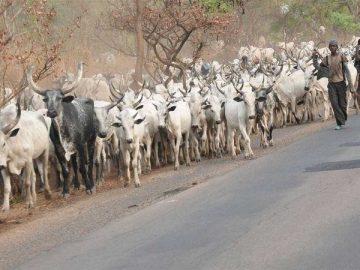 herdsmen-11096999228.jpg